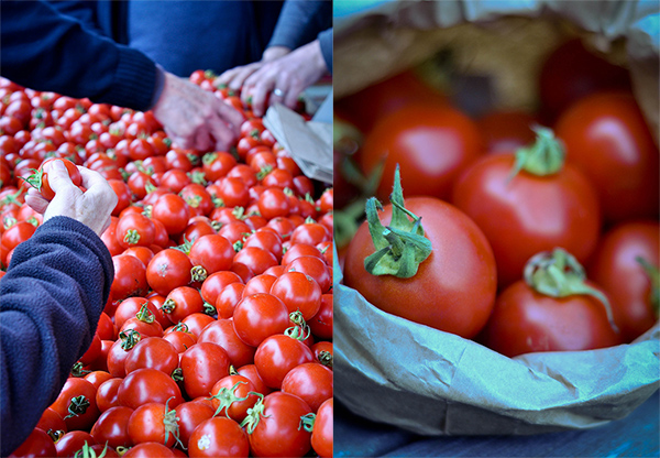 cBuying Dry Farmed Tomatoes